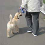愛犬が突然びっこを引き出した。足をケガする原因は?
