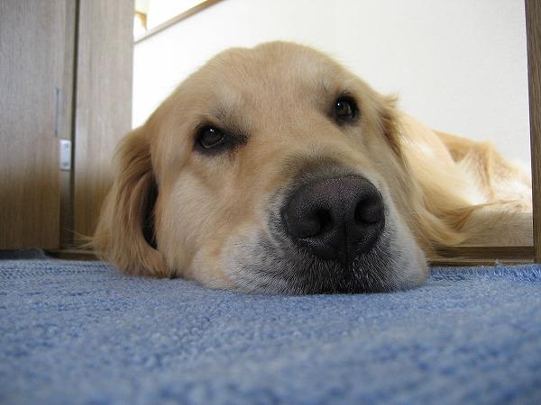 犬の混合ワクチンは毎年必要?