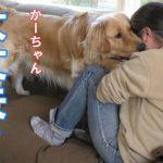 【神対応】泣いている飼い主に必死で対応する愛犬を見て下さい。