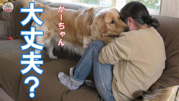 "<span class=""title"">【神対応】泣いている飼い主に必死で対応する愛犬を見て下さい。</span>"