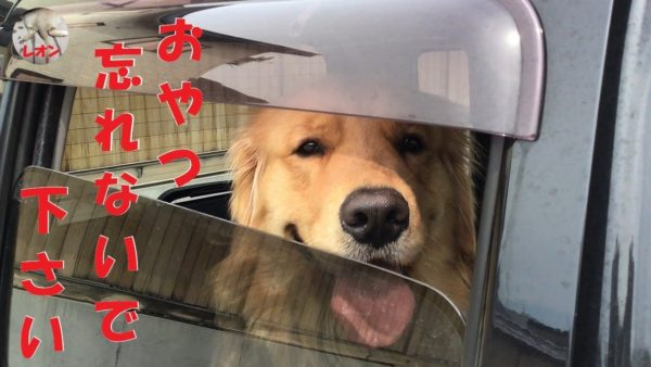 """<span class=""""title"""">ゴールデンレトリバーは車で待てる子ちゃん</span>"""