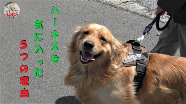 """<span class=""""title"""">ゴールデンレトリバー 大型犬 ハーネス お勧め5つの理由【ユリウス-K9】</span>"""