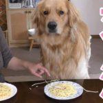 【早食い対決シリーズ#1】MAX鈴木も驚愕。部屋中にスパゲッティをばら撒いて勝ちに出る【Golden Retriever Leon】