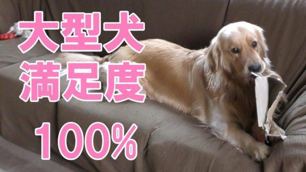 "<span class=""title"">大型犬満足度100%市販の犬用おもちゃよりもコレが好き</span>"
